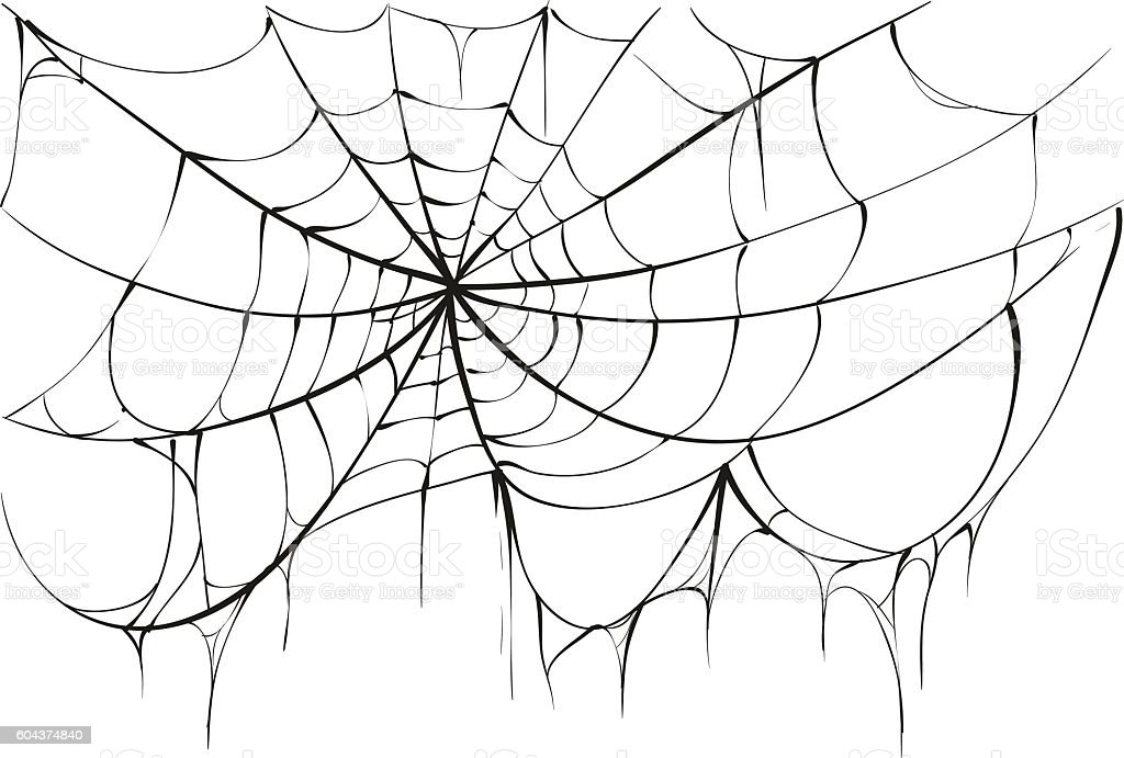 Torn Spider Web On White Background Stock Vector Art