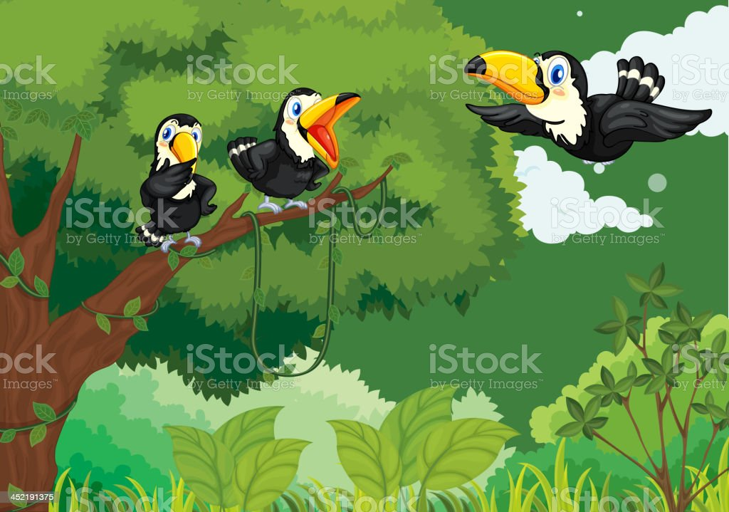 Toucans in the jungle royalty-free stock vector art
