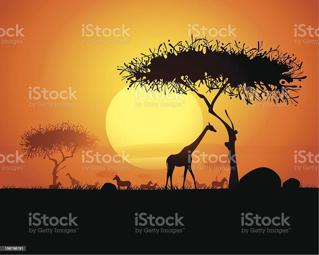 Tranquil sunset scene in africa vector art illustration