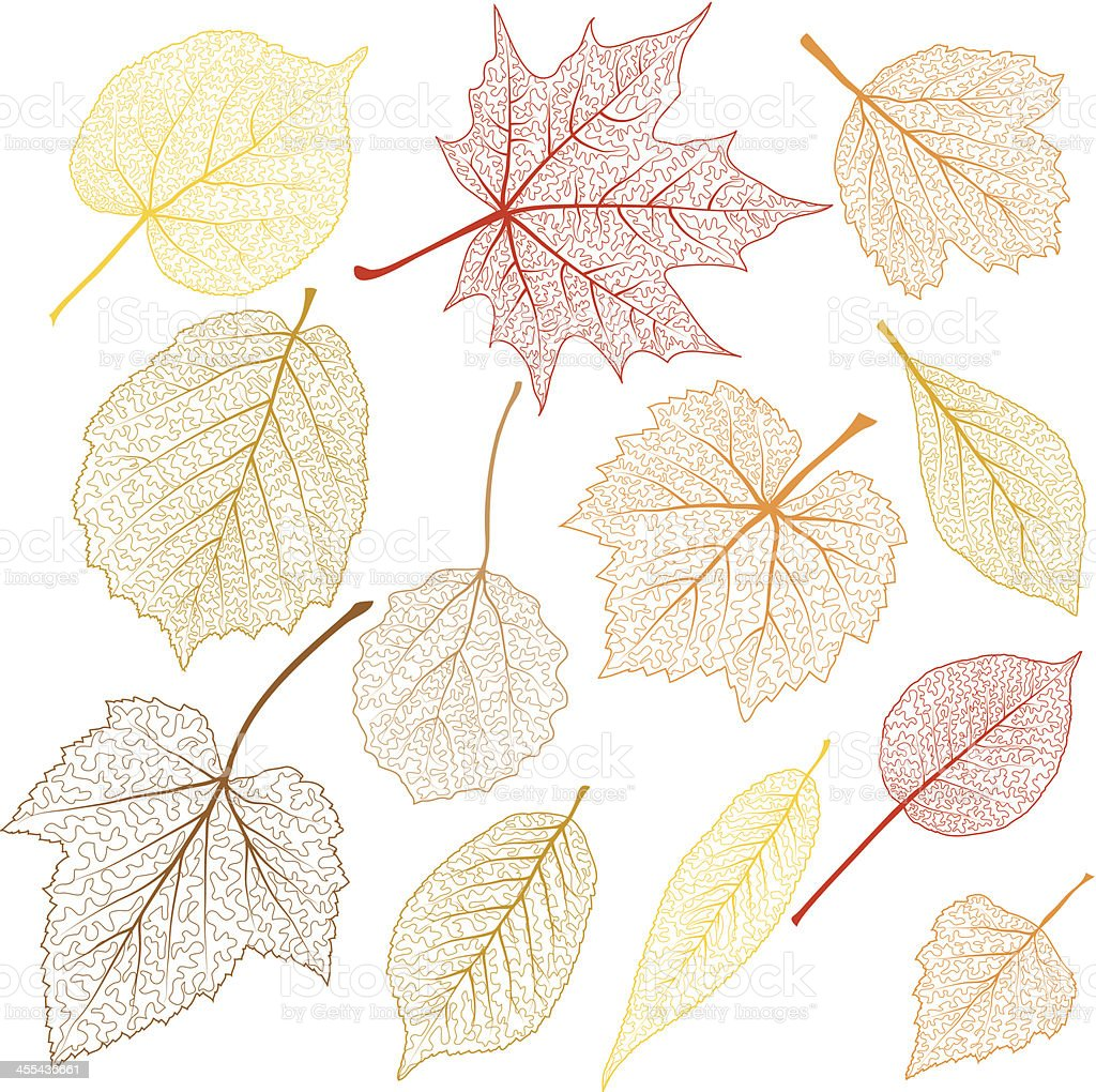 Transparent leaves royalty-free stock vector art