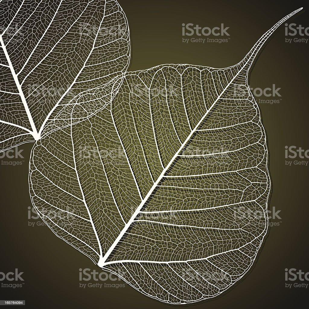Transparent Linden Leaf vector art illustration
