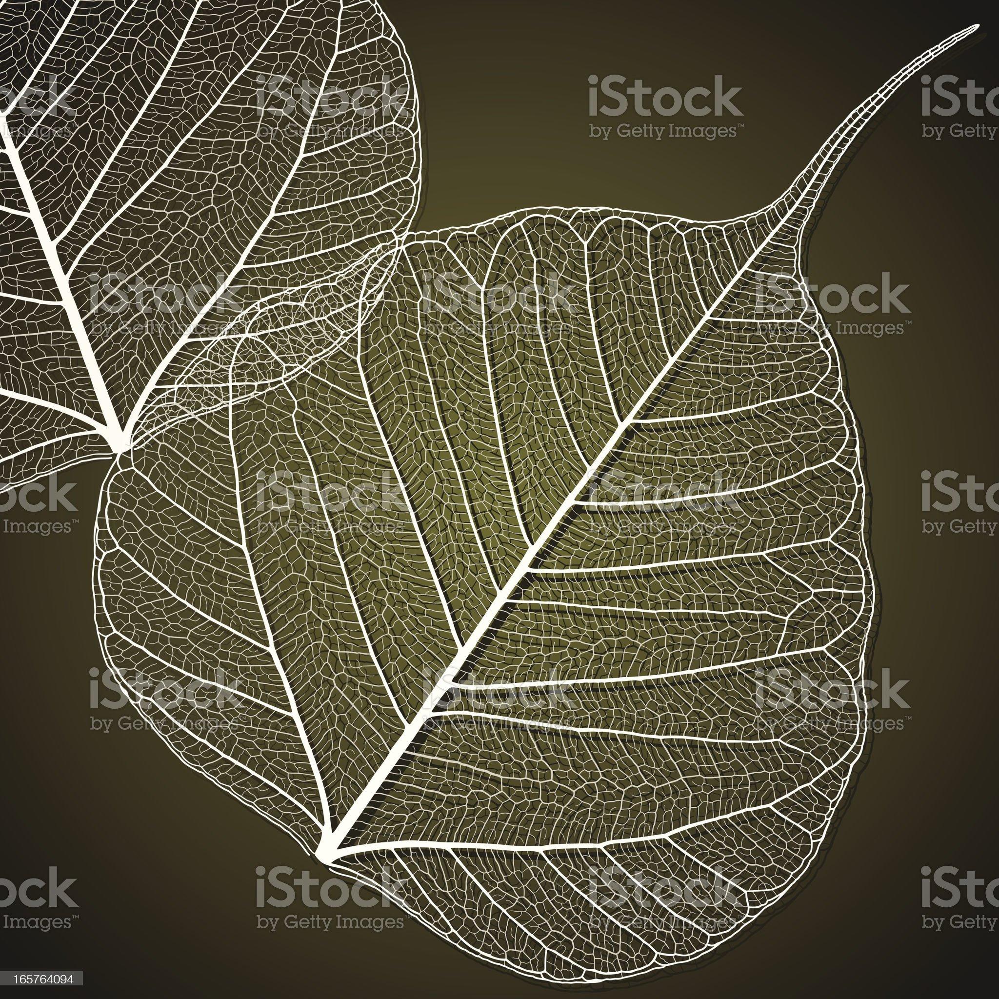 Transparent Linden Leaf royalty-free stock vector art