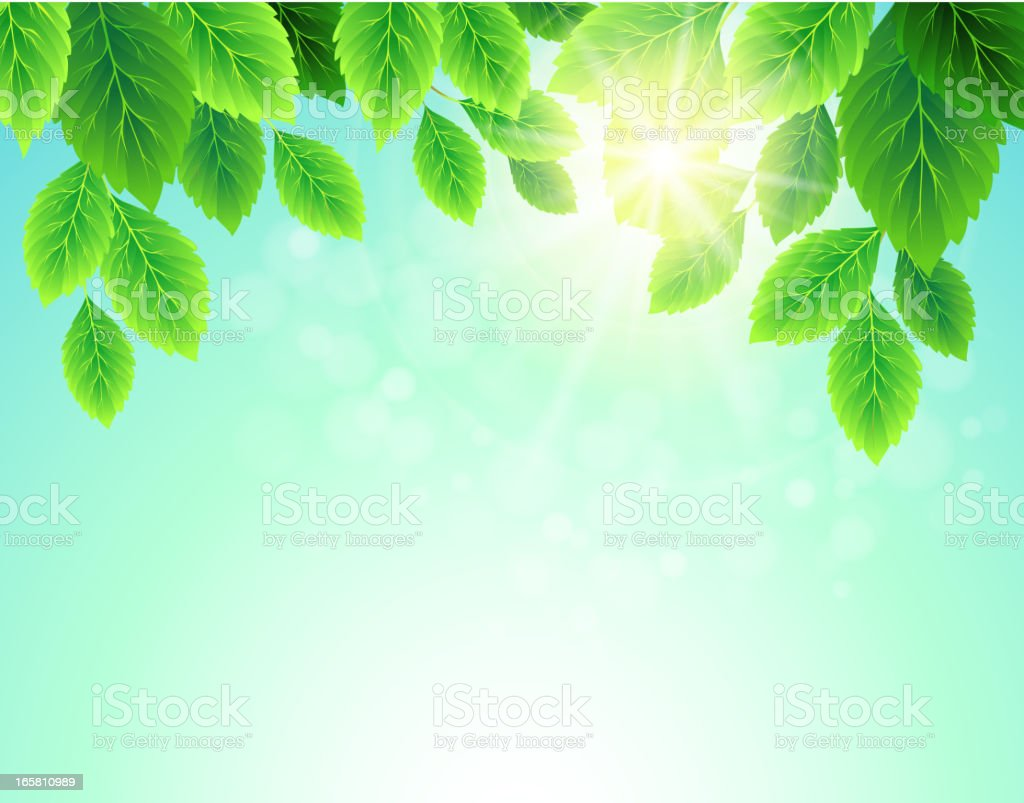 tree branch royalty-free stock vector art