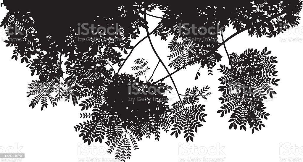 Tree Canopy vector art illustration