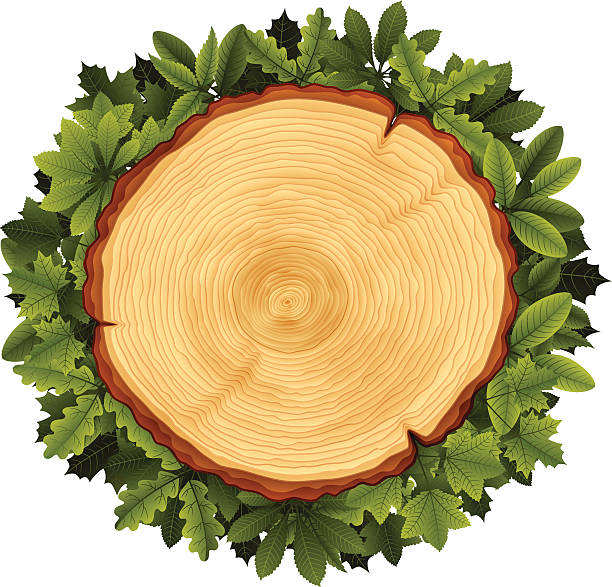Tree Rings Clip Art, Vector Images & Illustrations - iStock