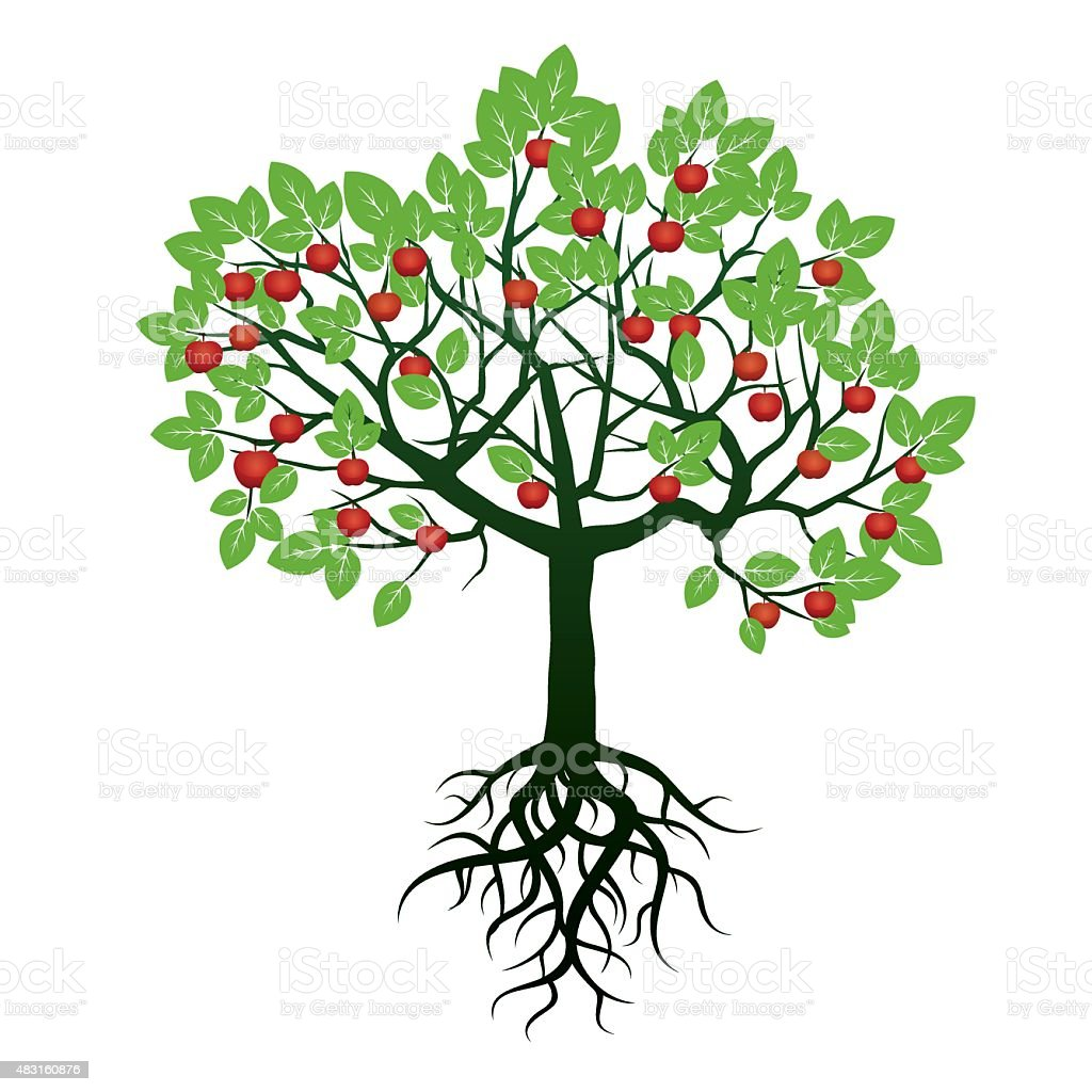 Tree, Green Leafs, Roots  and Red Apples. Vector Illustration. vector art illustration