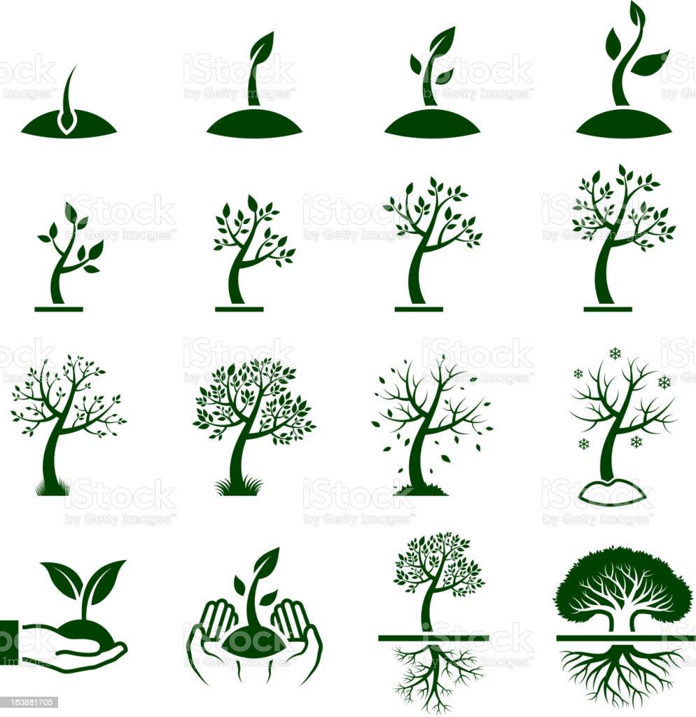 Tree Growing Process green royalty free vector icon set vector art illustration