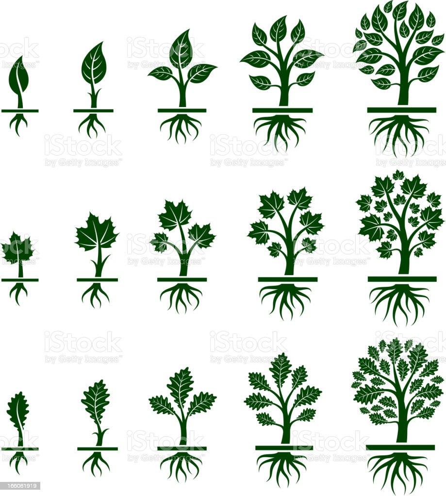 Tree Growing royalty free vector icon set vector art illustration