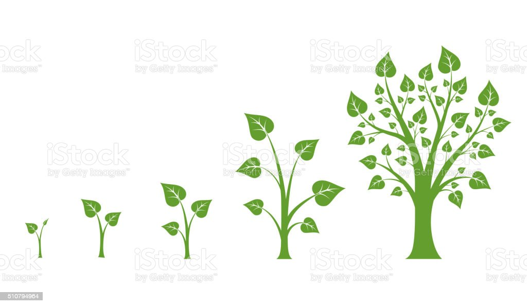 Tree growth vector diagram vector art illustration