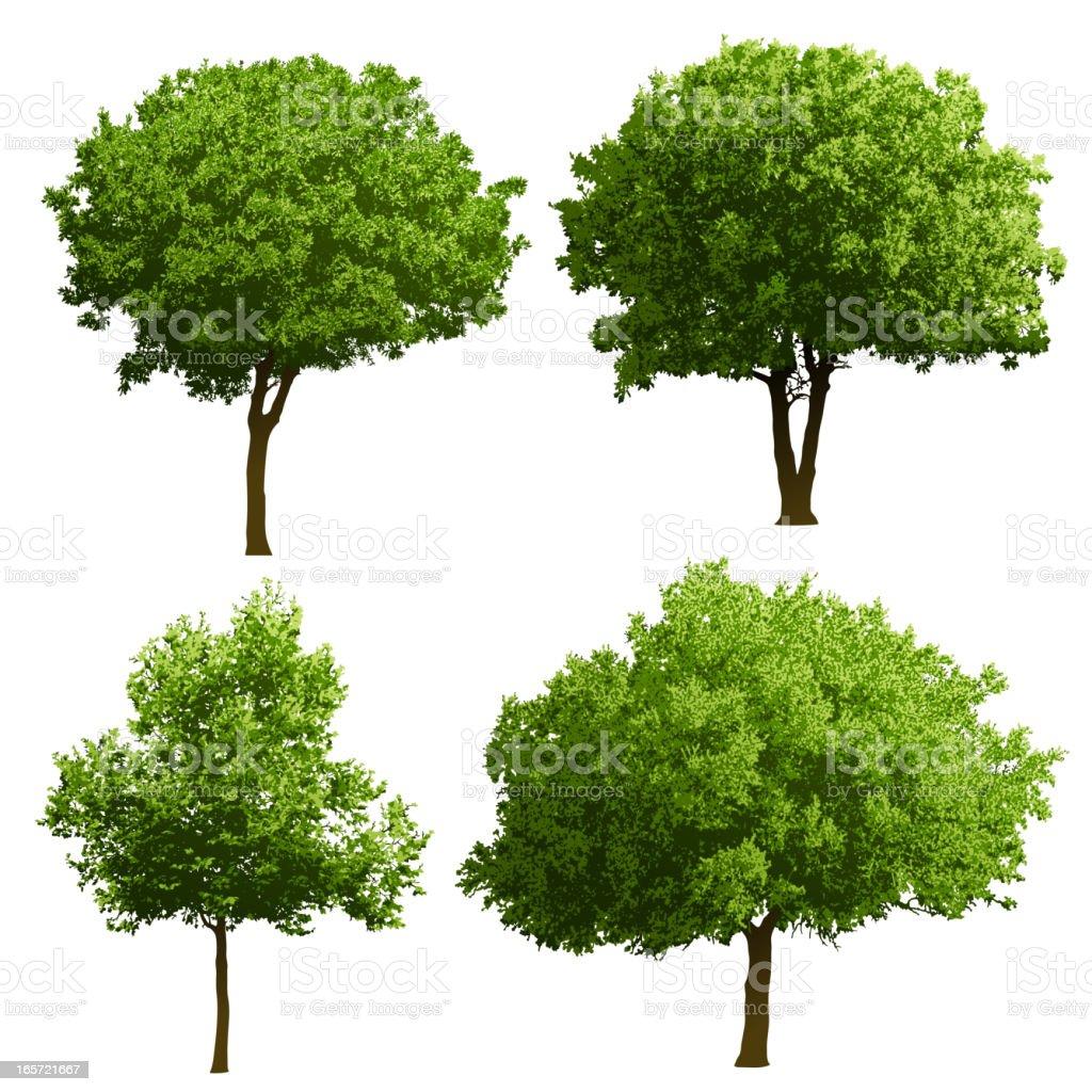 Tree Illustrations vector art illustration
