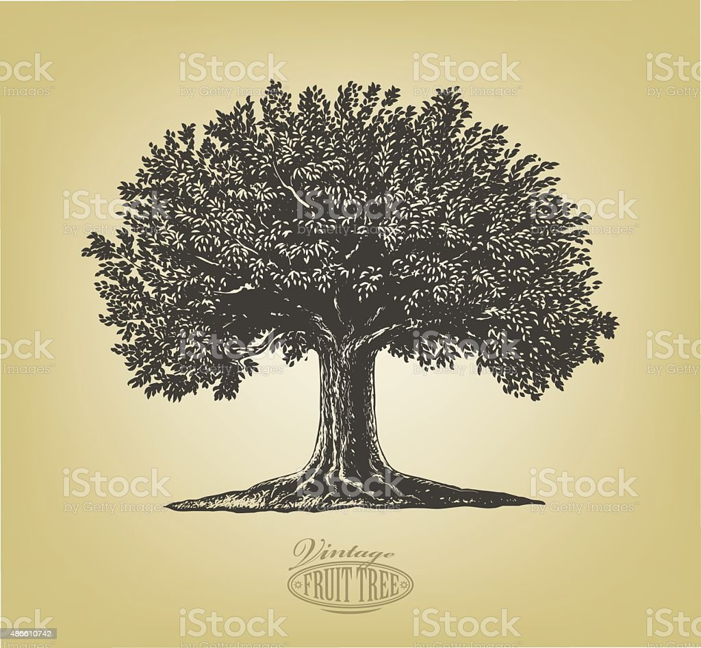 Tree in engraving style vector art illustration