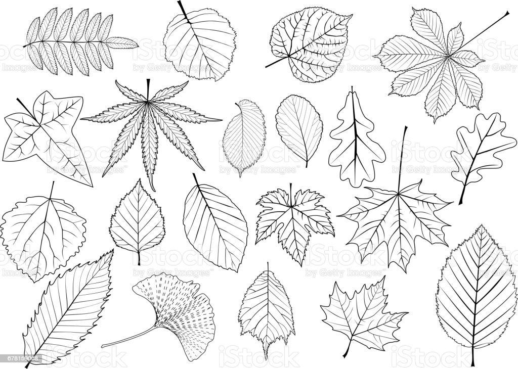 tree leaves set, vector art illustration