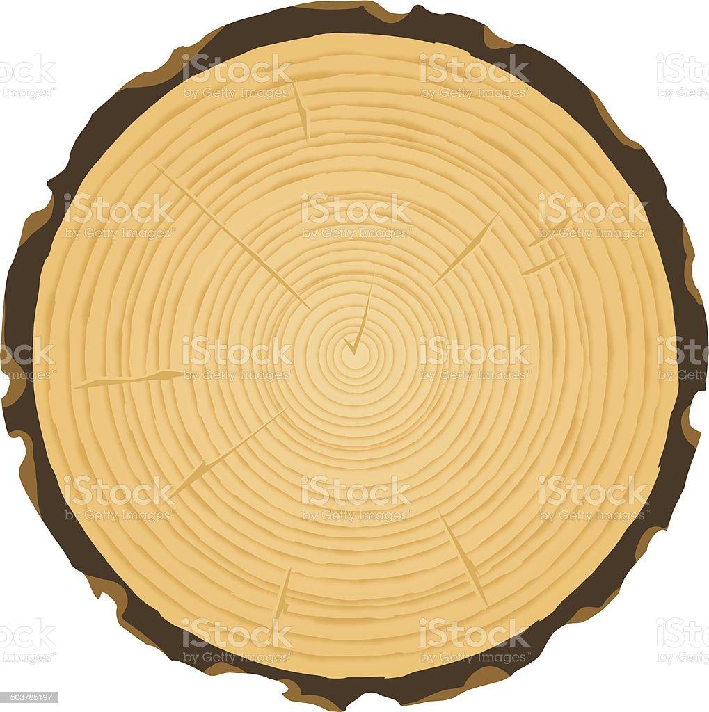 tree rings vector art illustration