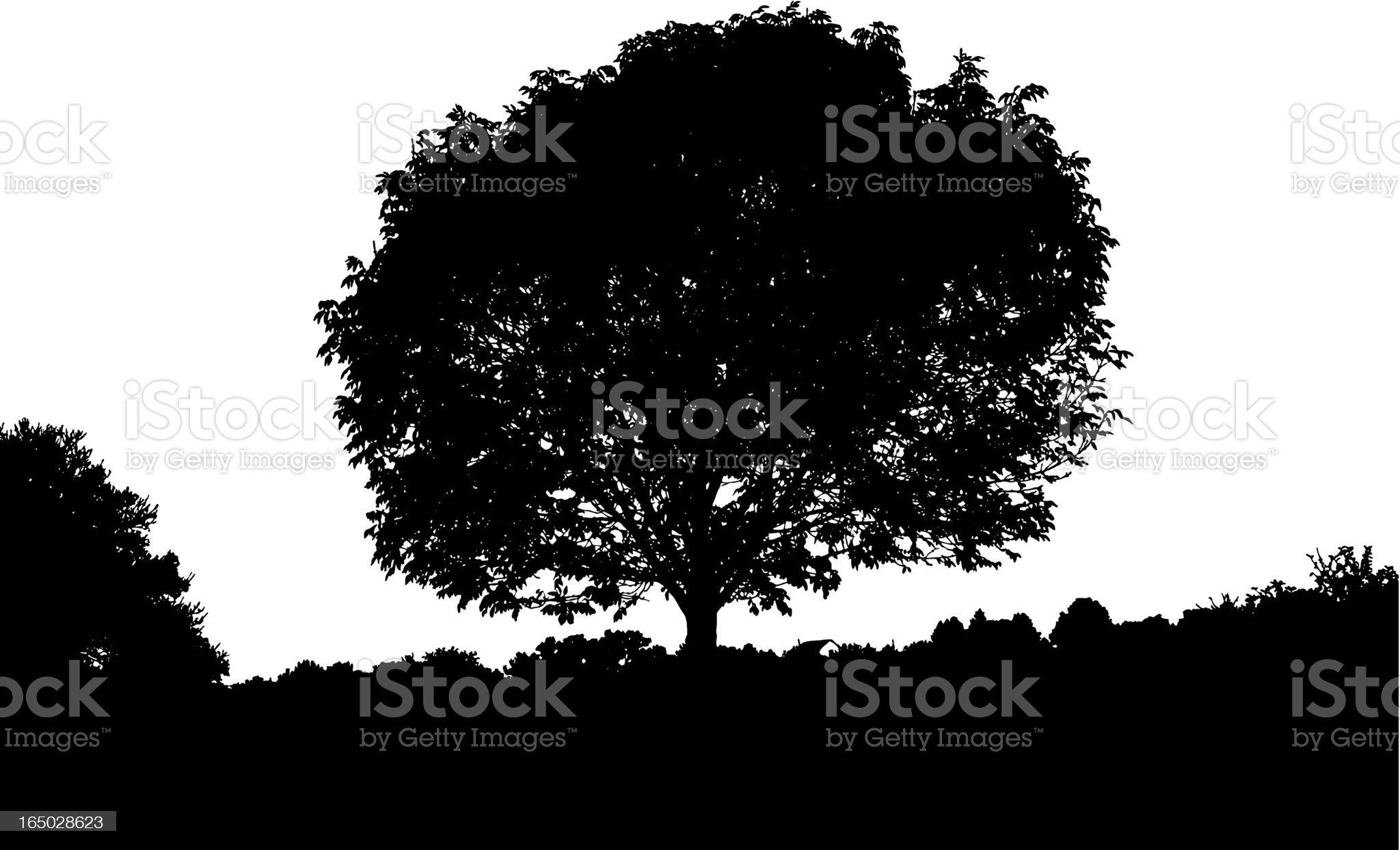 Tree Silhouete royalty-free stock vector art