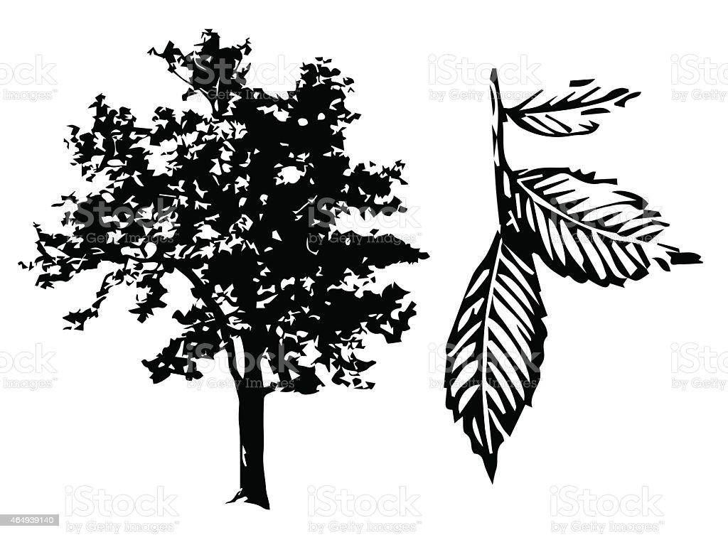 Tree silhouette isolated on white background, vector - Illustration vector art illustration