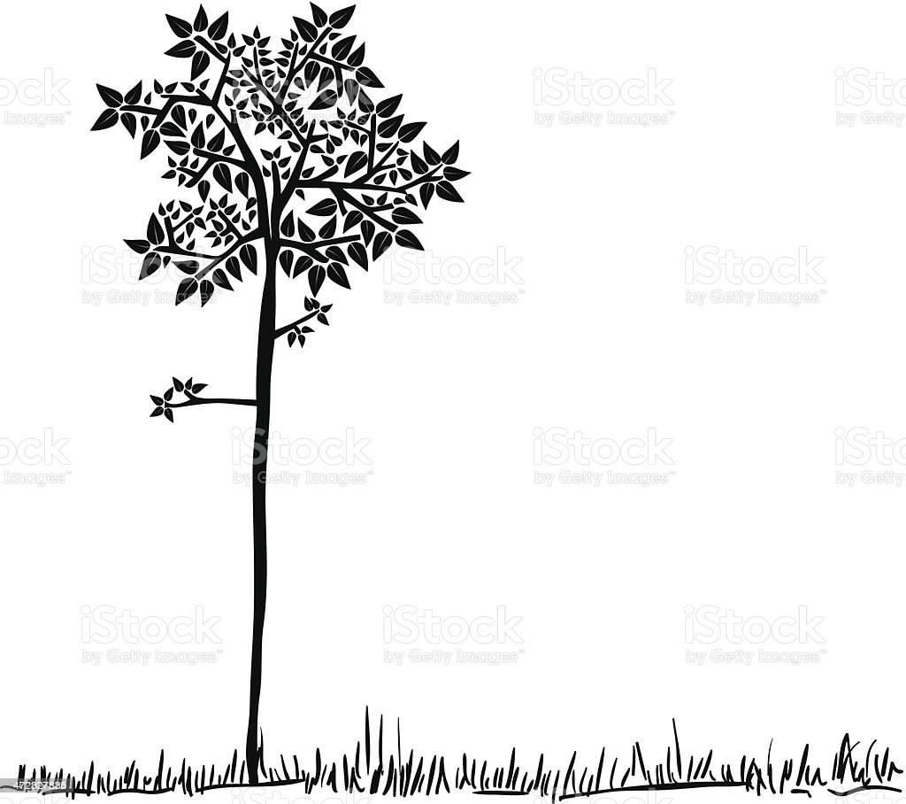 Tree silhouette isolated royalty-free stock vector art