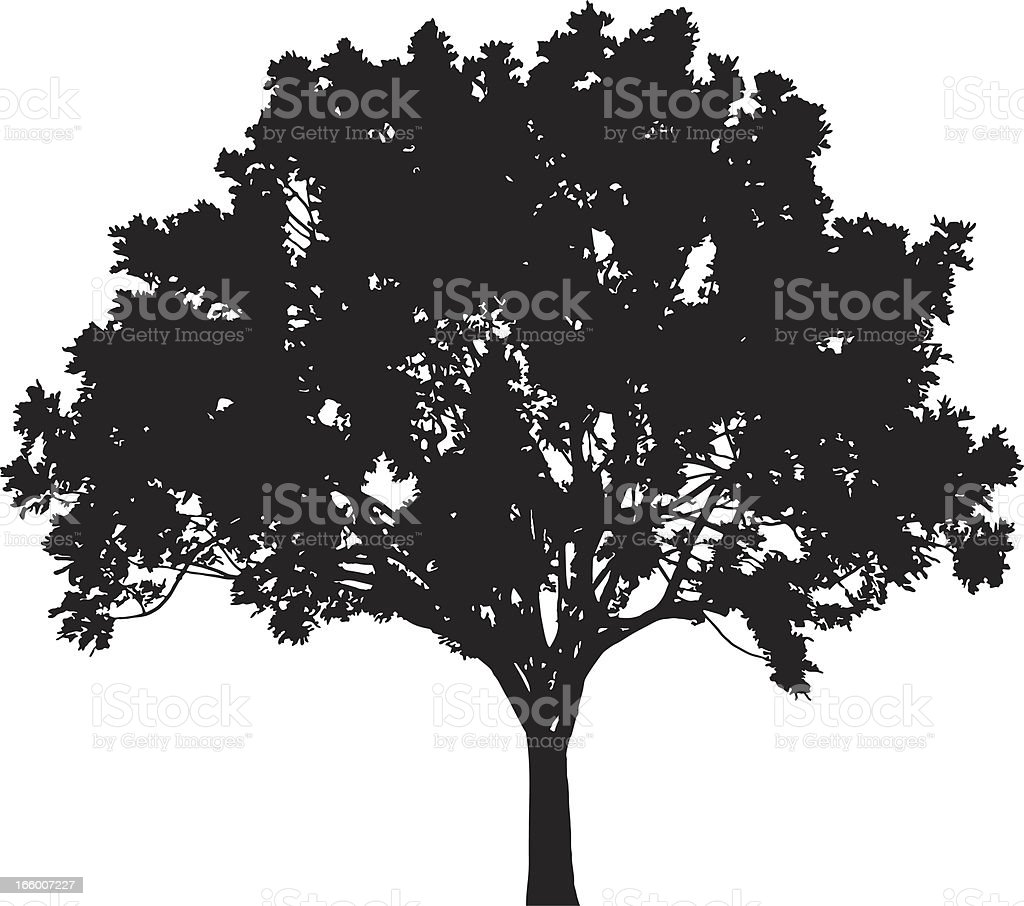Tree silhouette, Vector vector art illustration