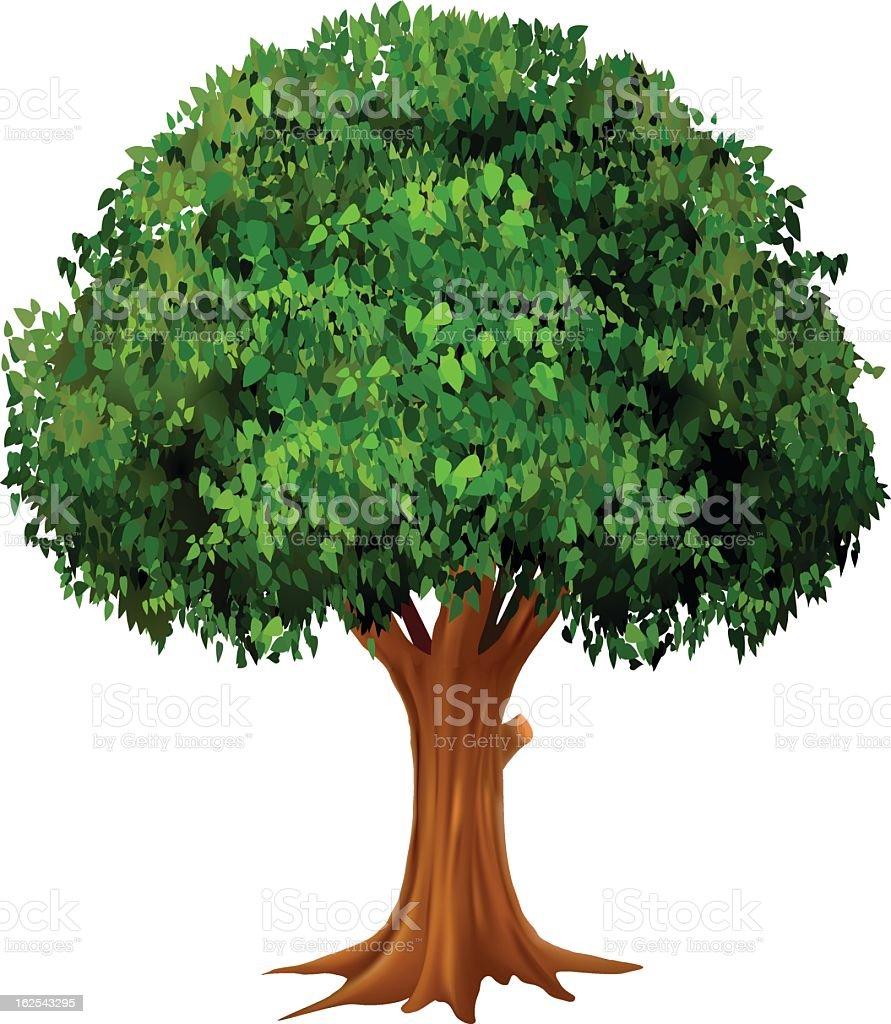 Tree Clip Art Black and White  Vector Oak   Pinterest