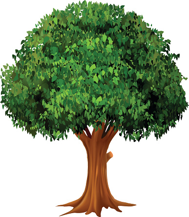 Oak tree Clip Art and Stock Illustrations 15259 Oak tree