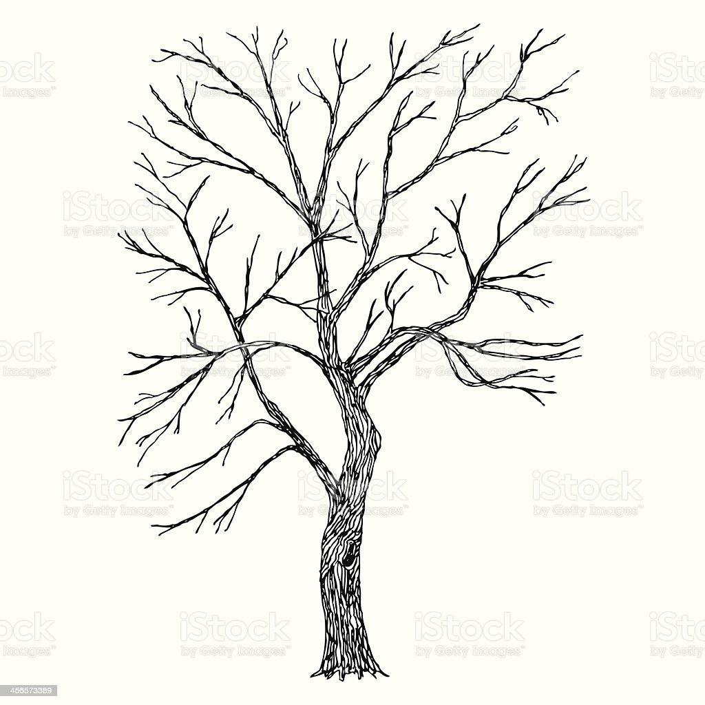Tree. Vector Illustration. Sketch vector art illustration