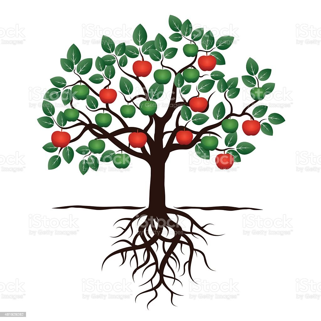 Tree with Green Leafs, Roots and Red Apple. vector art illustration