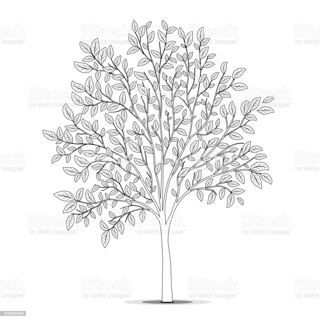 tree with leaves silhouette on white background coloring page royalty free stock vector art