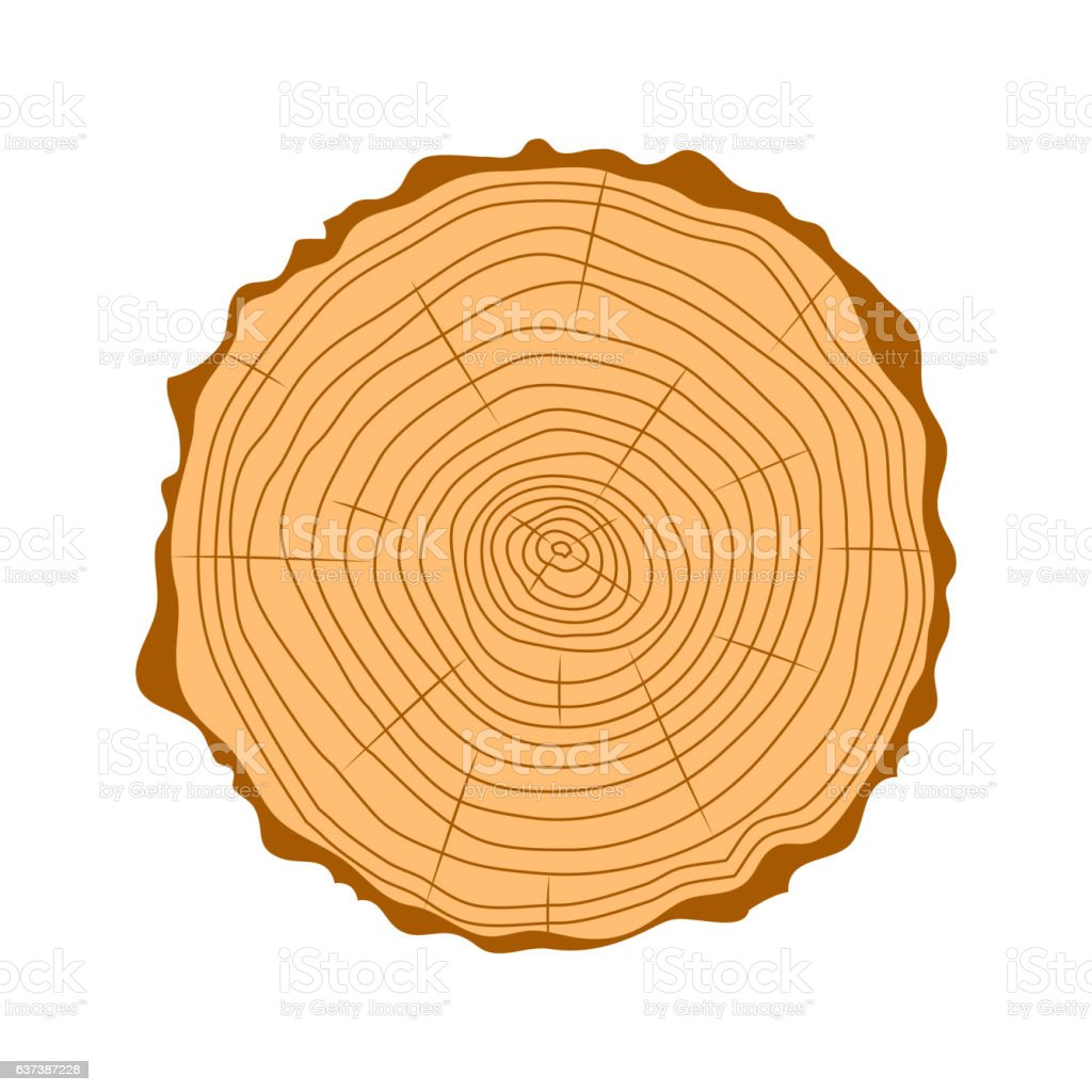 Tree wood slices vector. vector art illustration
