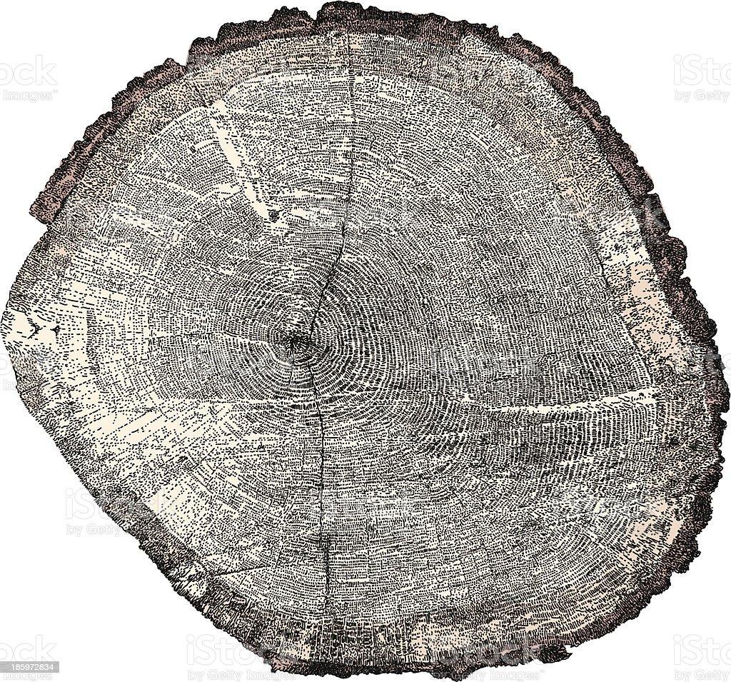 Tree x-section vector art illustration
