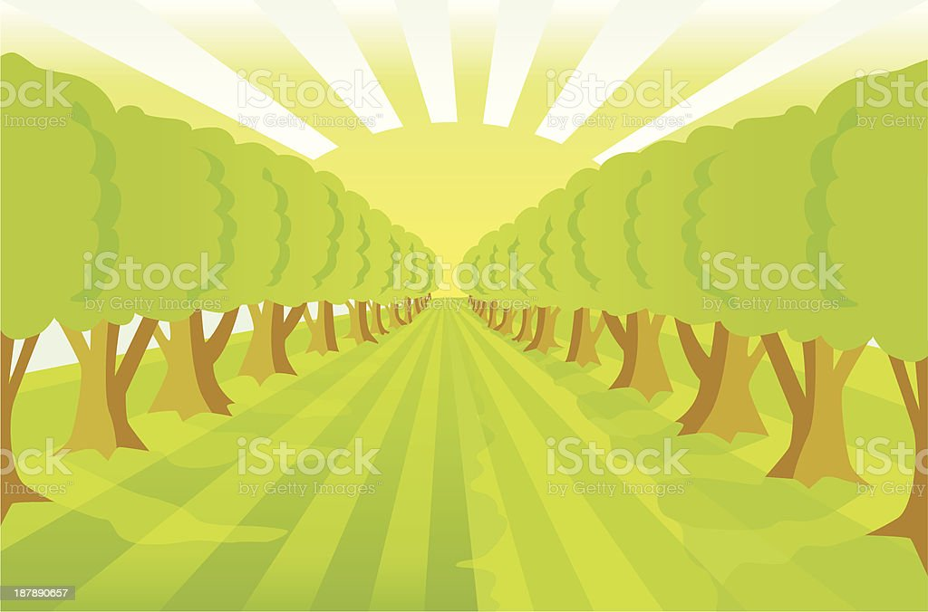 Treealley naturebackground with sunlightlines. royalty-free stock vector art
