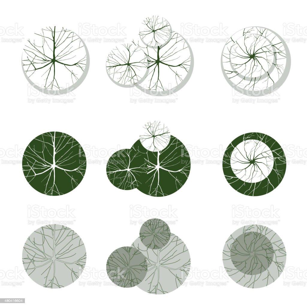 trees for your own landscape desgns vector art illustration