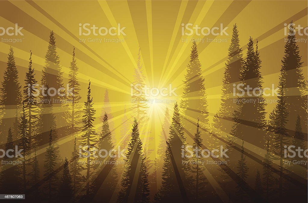 Trees In Golden Mist vector art illustration