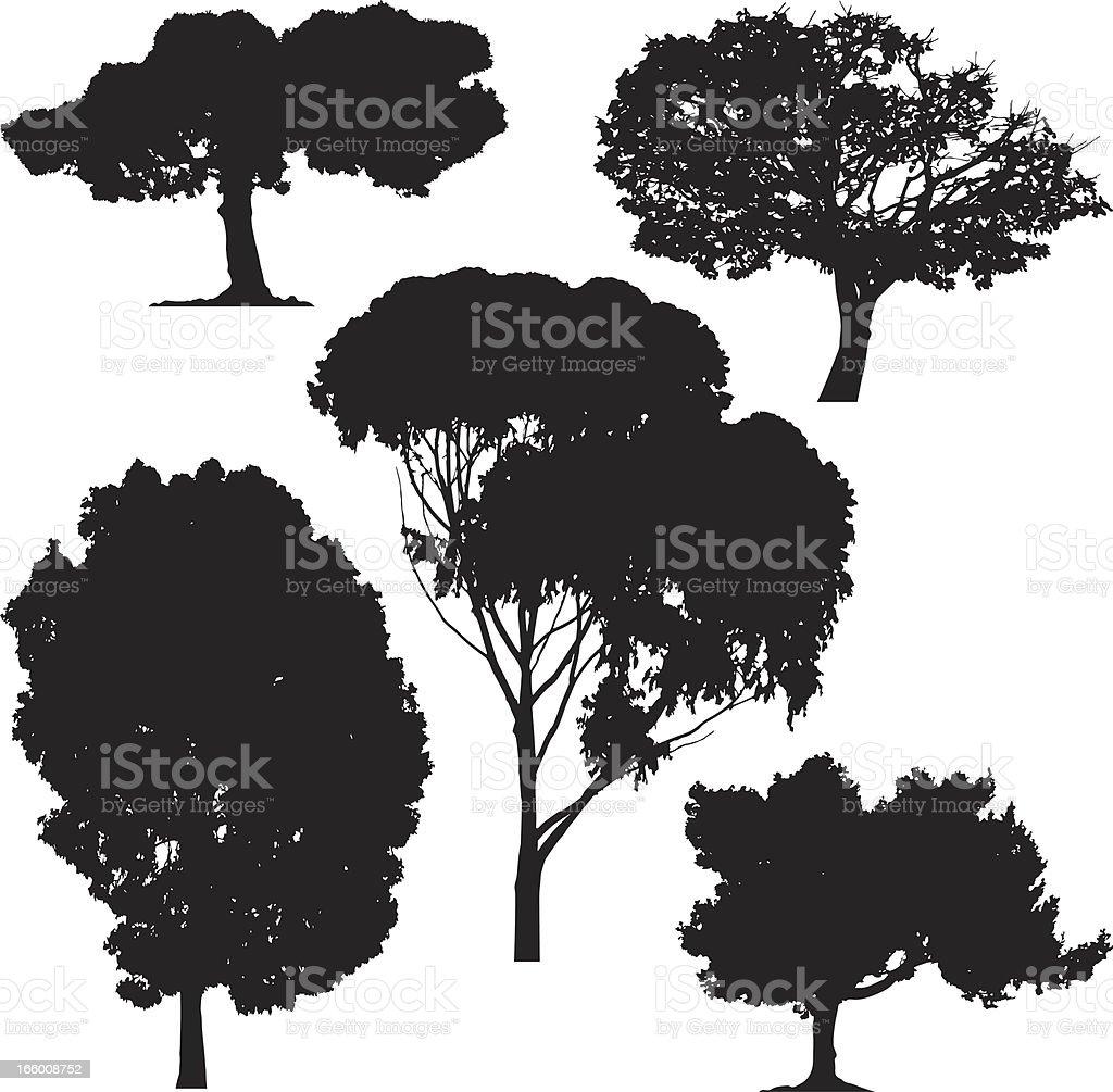 Trees, vector royalty-free stock vector art