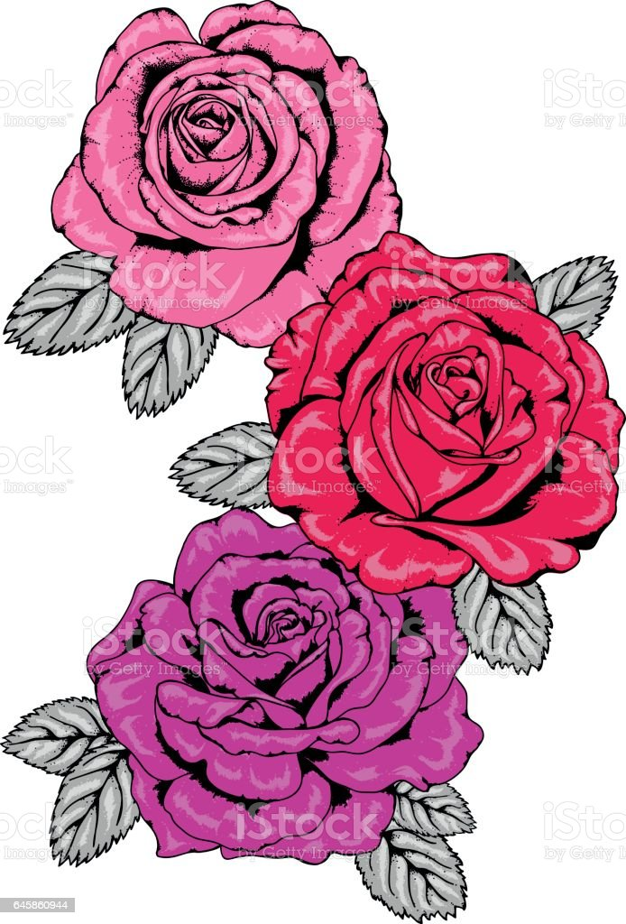 Trio of Tattoo Style Pink, Red and Purple Rose Vector Illustrations with Black Outlines vector art illustration