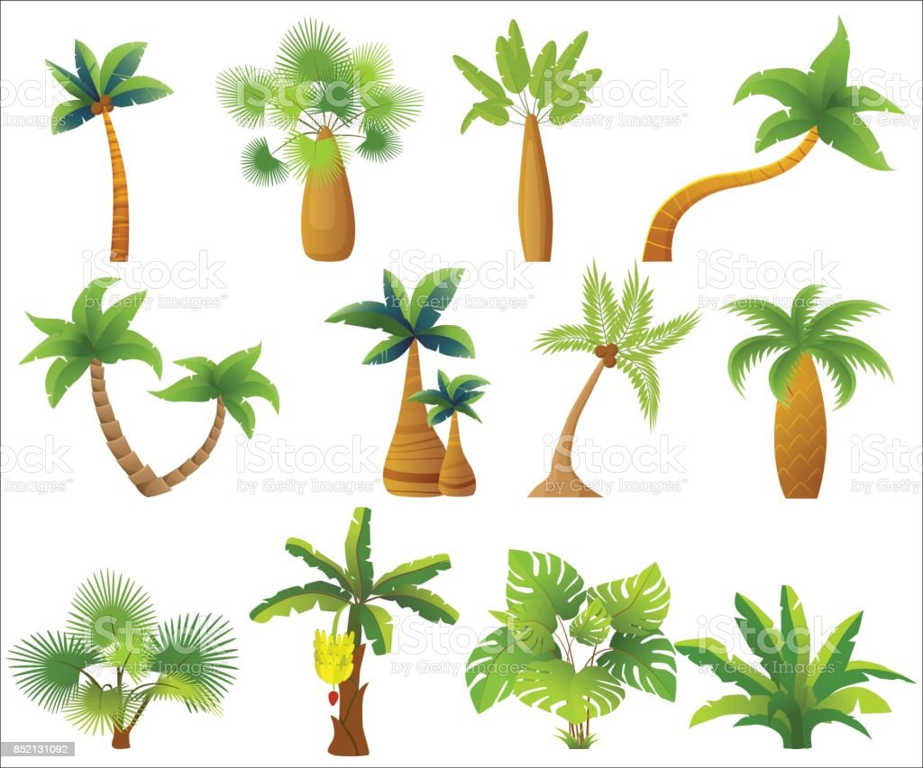 Tropic palm trees isolated. Exotic palm tree set vector illustration. vector art illustration