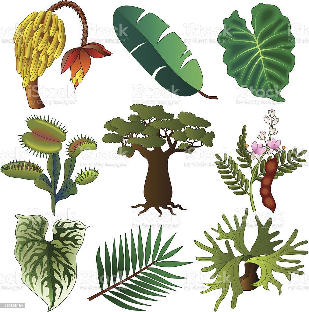 tropical African plants vector art illustration