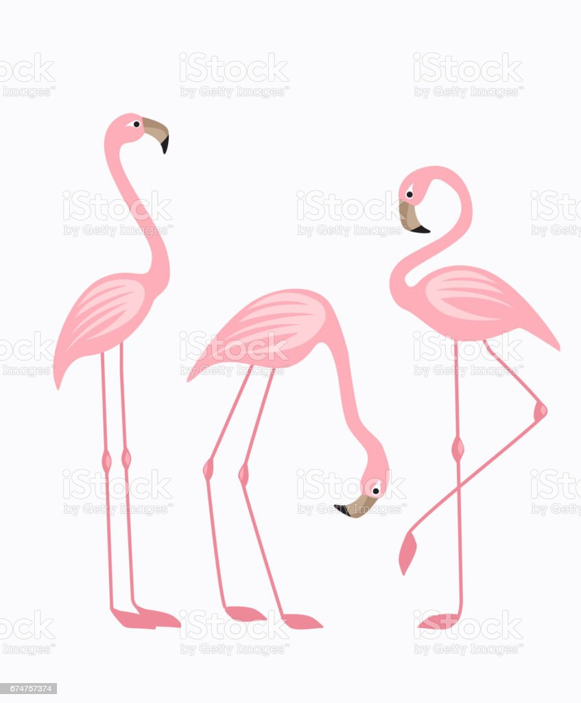 Tropical bird flamingos vector art illustration