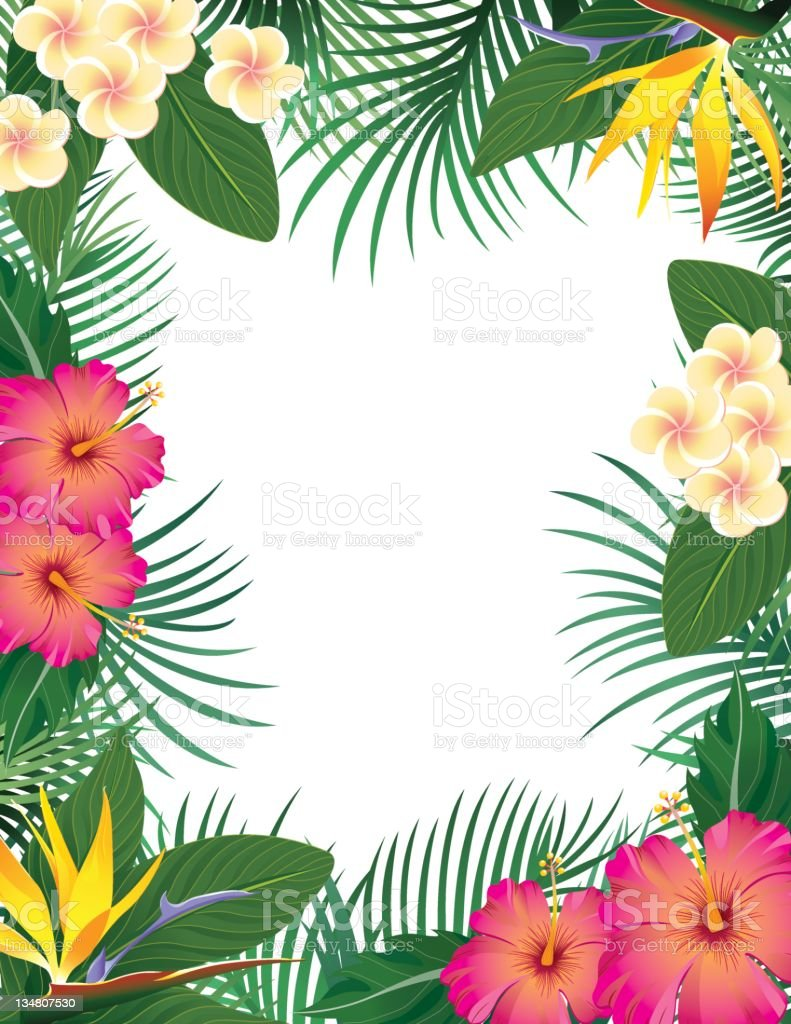 Tropical Border vector art illustration