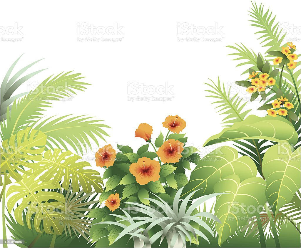 Tropical Border with Orange Hibiscus vector art illustration