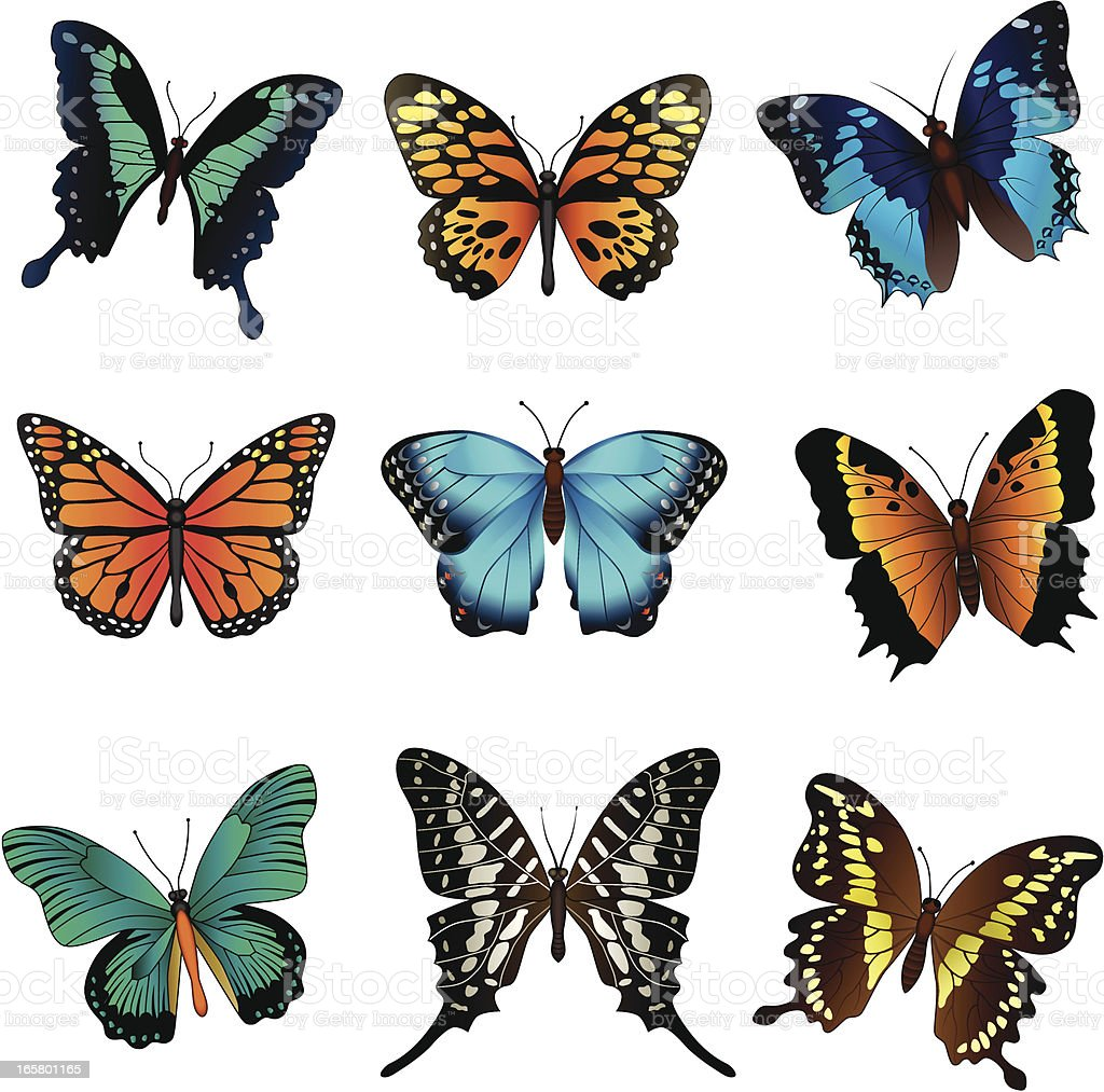 tropical butterflies vector art illustration