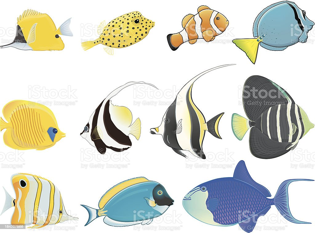 Tropical fishes / Poissons tropicaux vector art illustration
