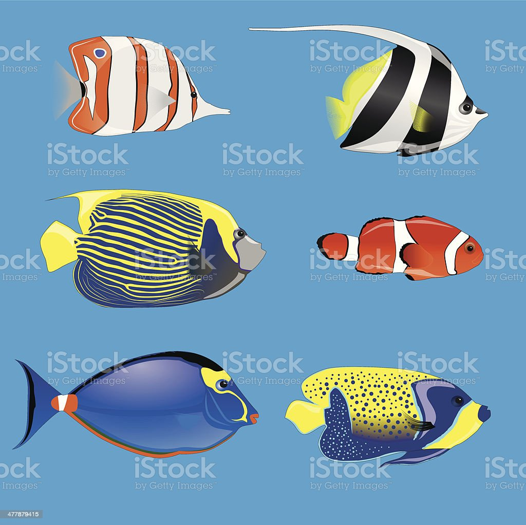 tropical fishes royalty-free stock vector art
