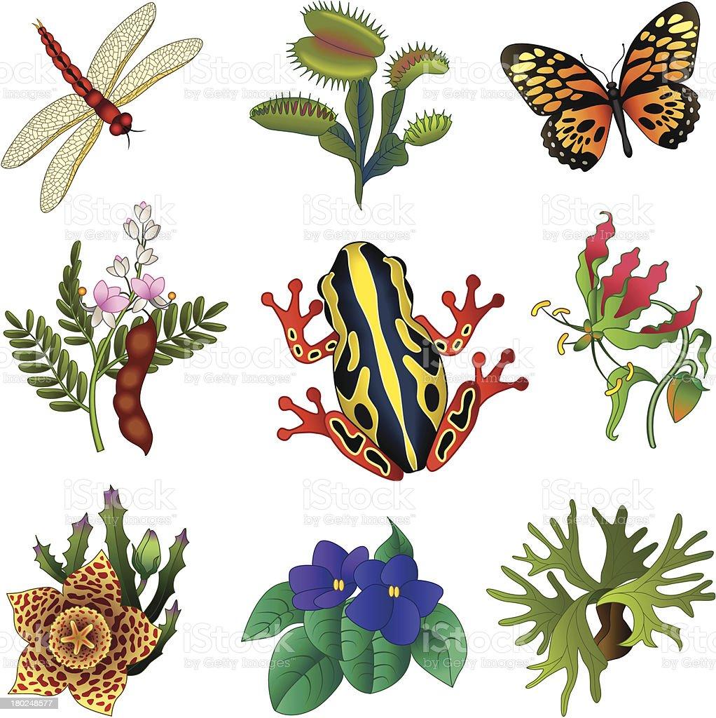 tropical flora and fauna vector art illustration