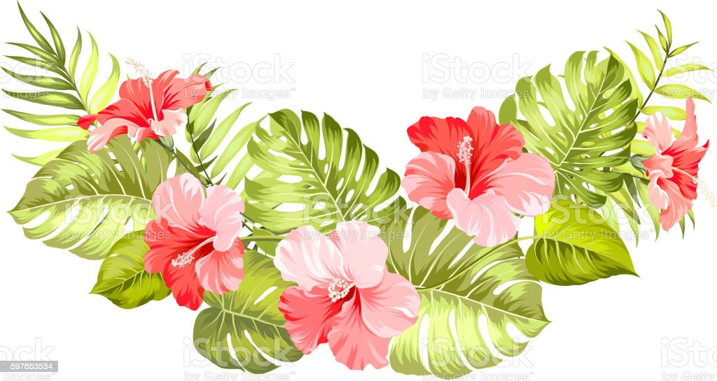 Tropical Flower Line Drawing : Tropical flower of hibiscus stock vector art