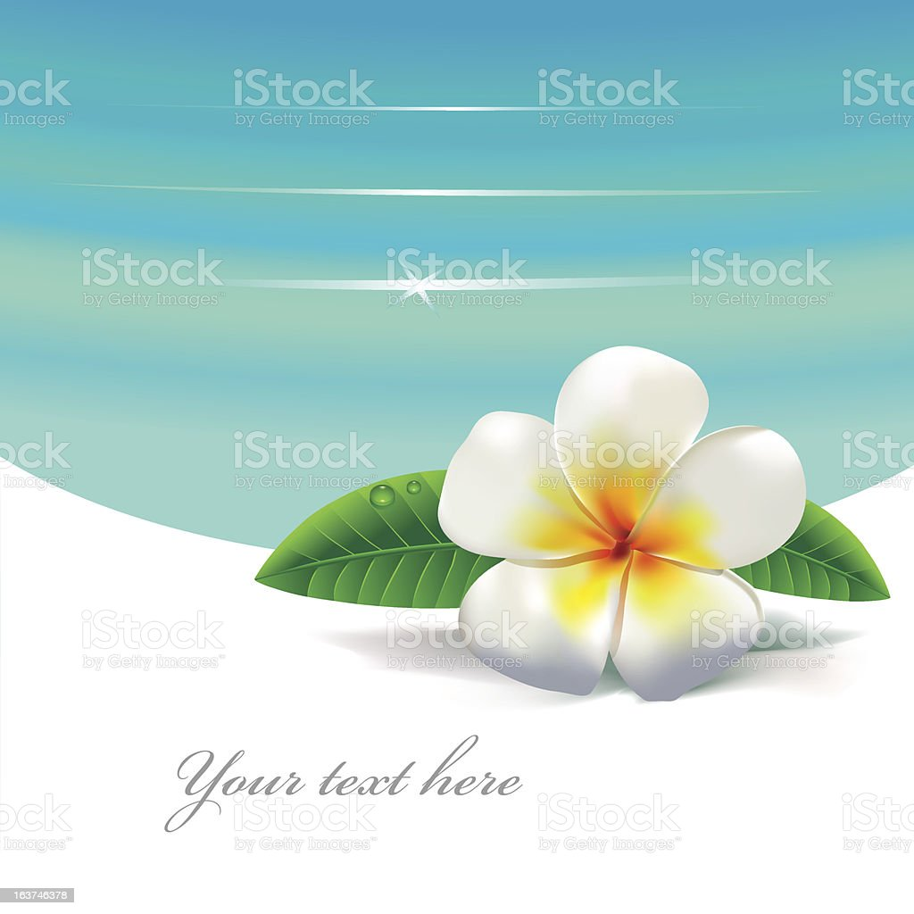 tropical flower royalty-free stock vector art
