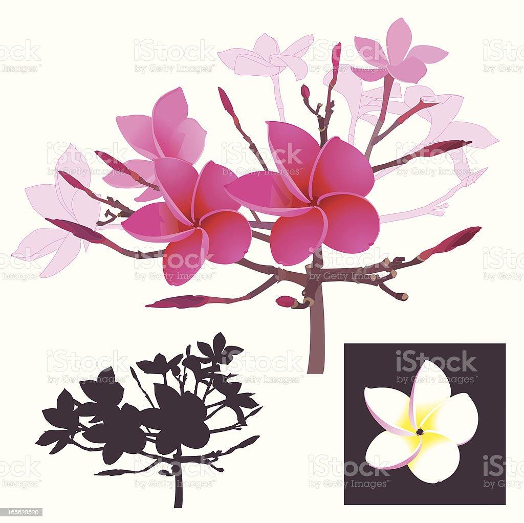 Tropical Flower-Design Elements vector art illustration