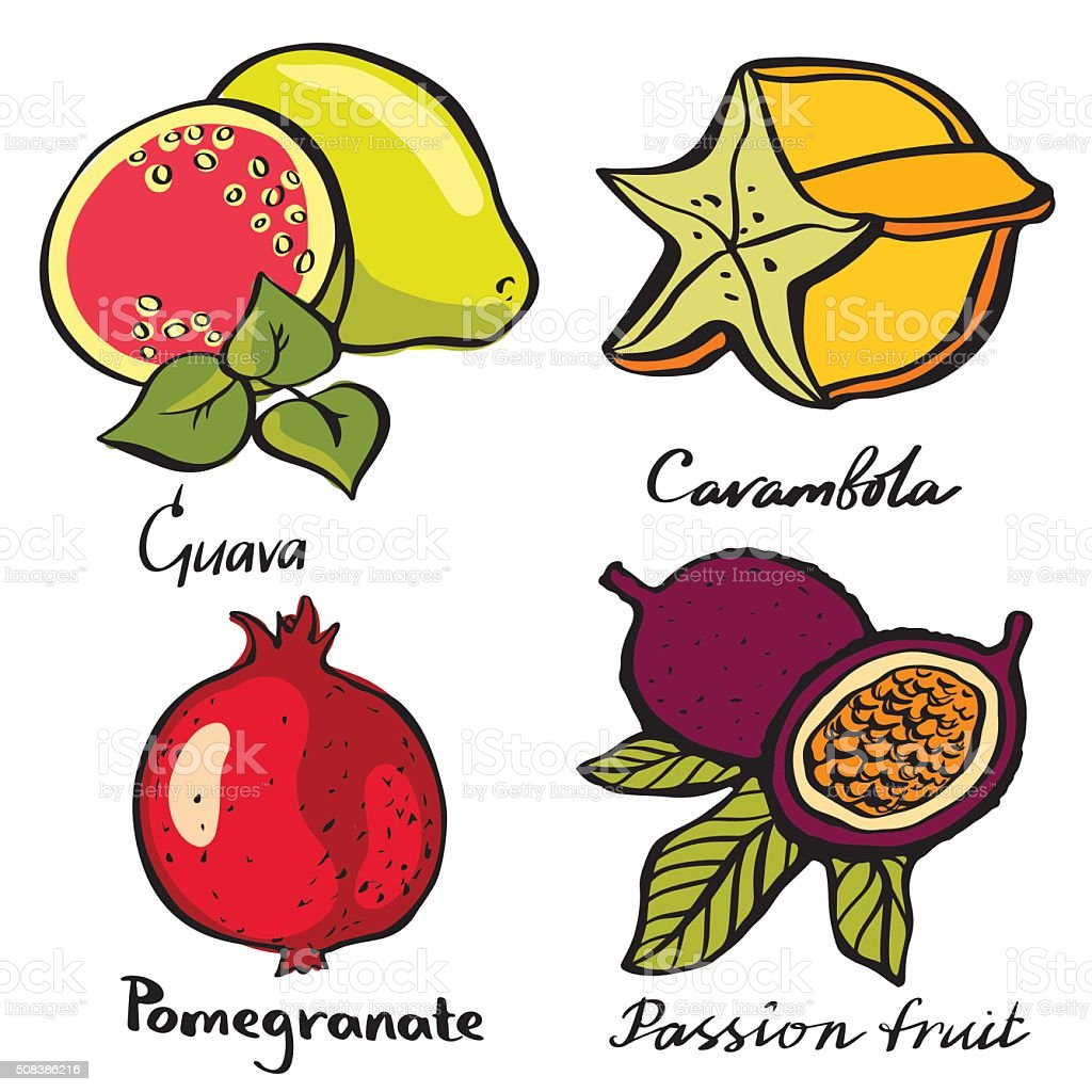 Tropical fruits set vector art illustration