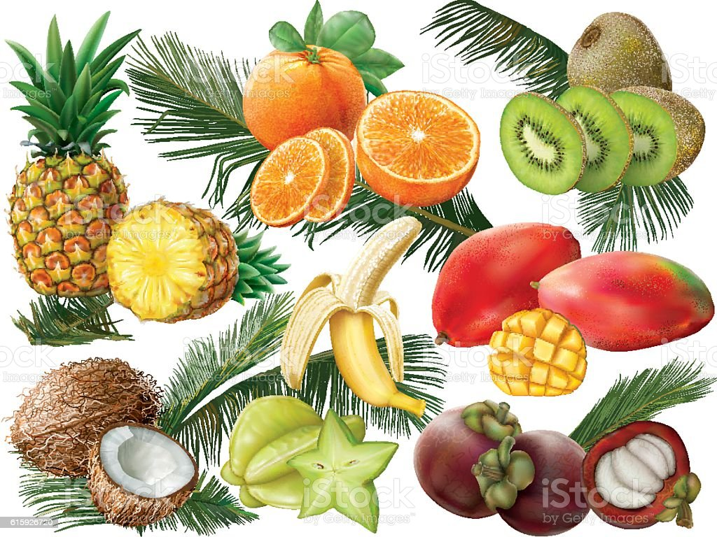 Tropical fruits with palm leaves vector art illustration