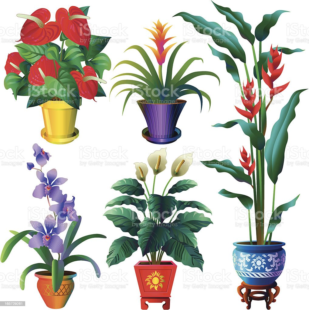 tropical house plants stock vector art 165729261 | istock