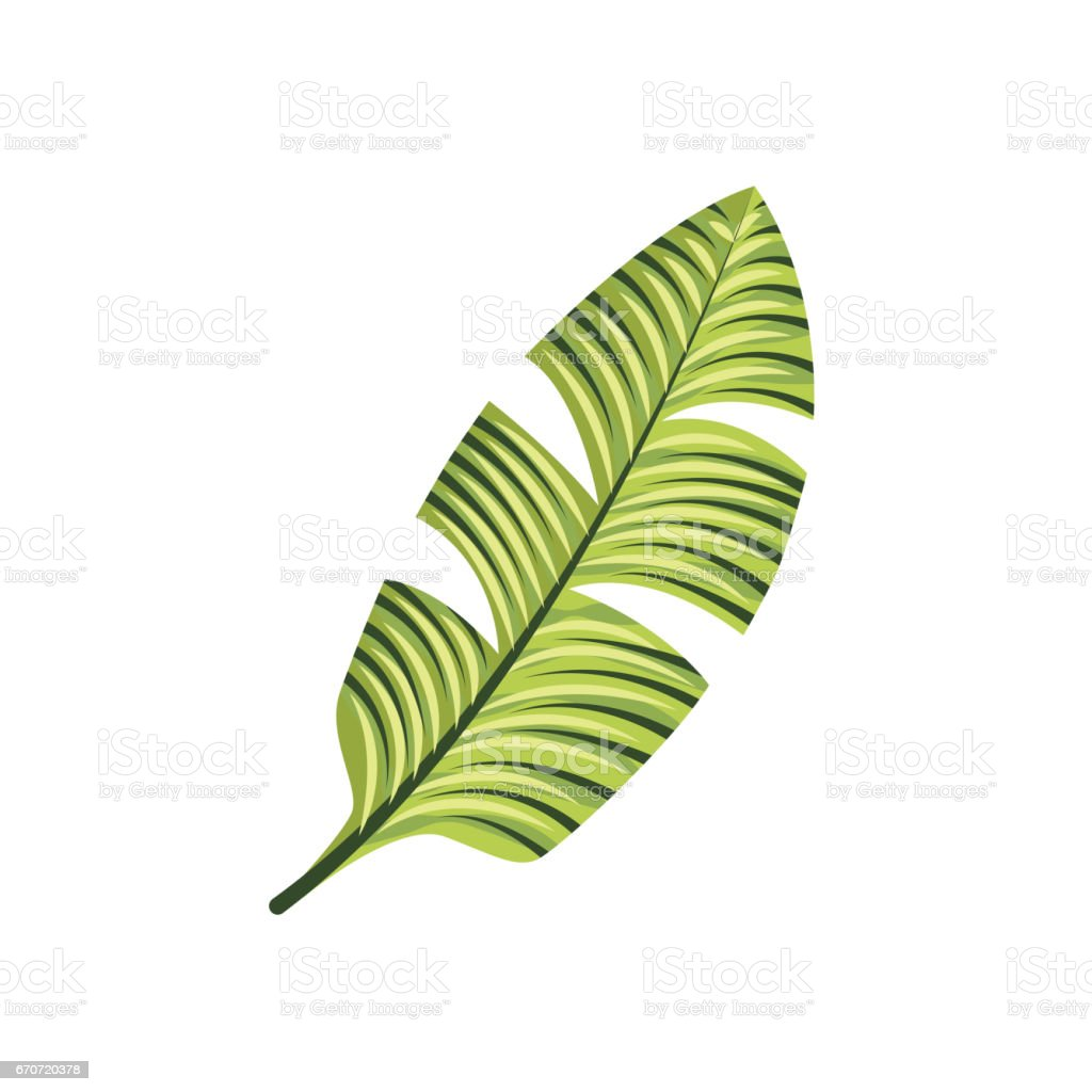 Tropical leaf icon vector art illustration