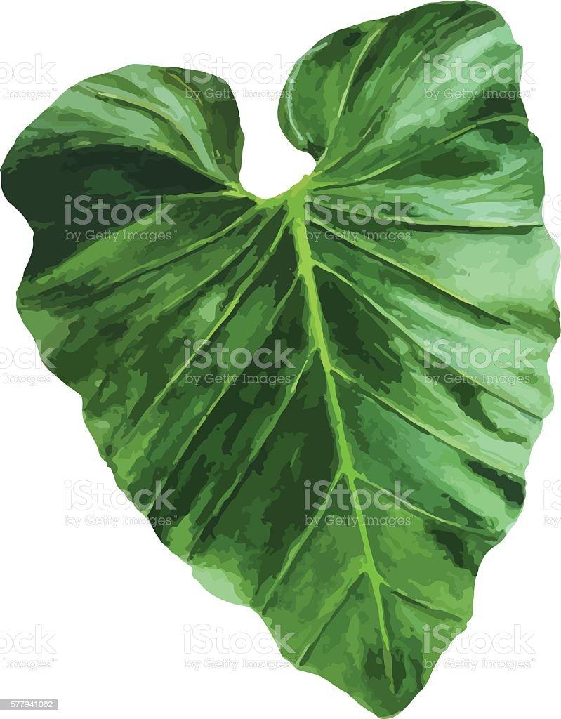 Tropical leaf. vector art illustration